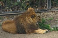 Lions09