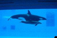 Orca05