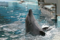 Dolphin03