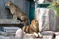 Lions25