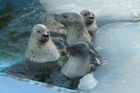Seal04