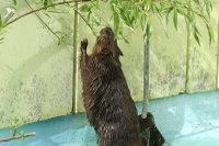 Beaver06