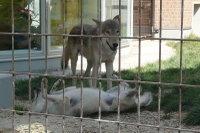 Wolves_m02