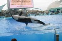 Orca12