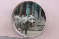 Wolf_o03