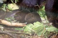 Beaver09