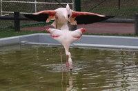Flamingo08