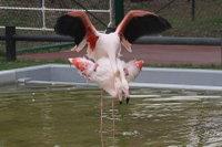 Flamingo09_2