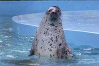 Seal_o01