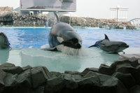 Orca16