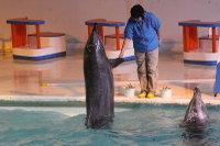 Dolphin_o02