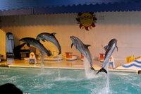 Dolphin_o04