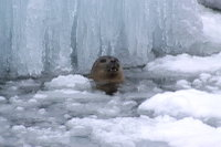 Seal09