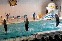 Dolphin_o05
