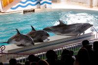 Dolphin_o06