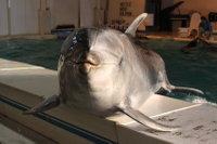 Dolphin_o07