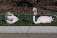 Flamingo18