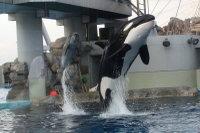 Orca17