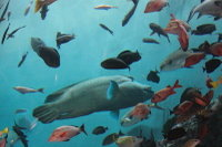 Napolonfish03