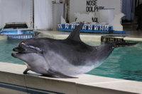 Dolphin_o08