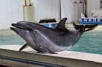 Dolphin_o09