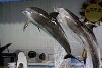 Dolphin_o10
