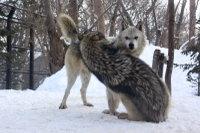 Wolves_m14
