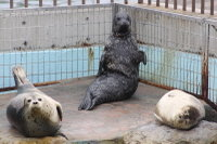 Seal_o05