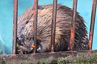 Beaver35
