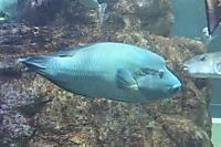 Napolonfish05