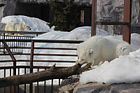 Arctic_fox47