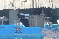 Orca19