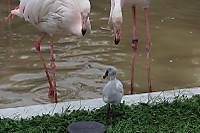 Flamingo22
