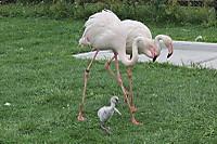 Flamingo24