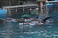 Orca22
