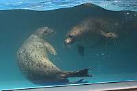 Seal_s01