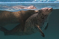 Seal_s02