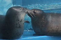 Seal_s03