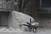 Cheetah08