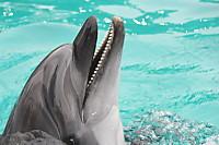 Dolphin05