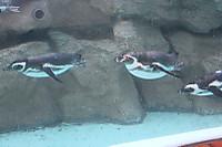 Penguins06