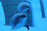 Dolphin07