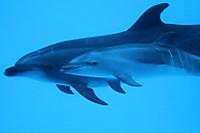 Dolphin08