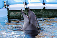 Dolphin09