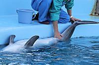 Dolphin11