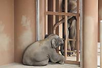 Asian_elephant17