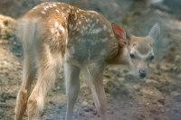 Bambi04