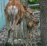 Bambi05_1