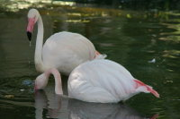 Flamingo02