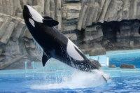 Orca02